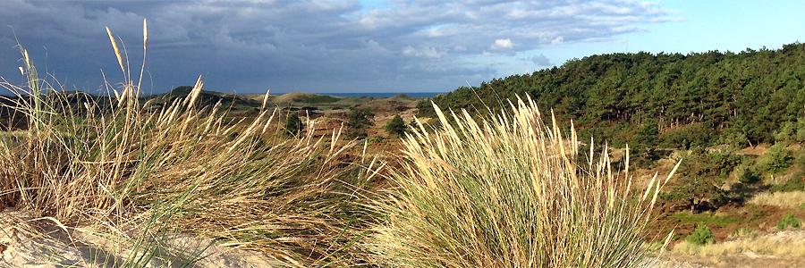 Struinen door de Schoorlse duinen bij Hargen
